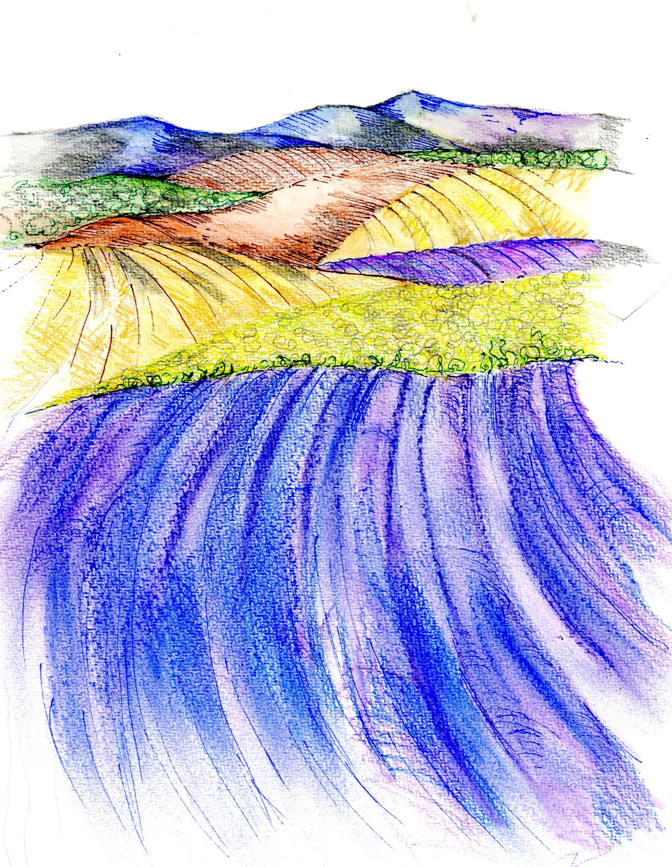 Lavender an Sunflower001