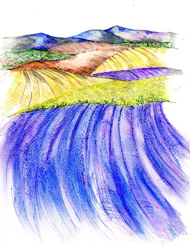 Lavender an Sunflower001